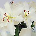 Lilies by John Bradburn