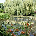 Lily Pond - Monets Garden by Christiane Schulze Art And Photography
