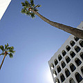 Looking Up In Beverly Hills by Cora Wandel