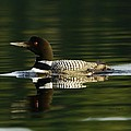 Loon 6 by Steven Clipperton