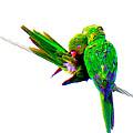 Love Birds by J Anthony