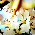 Love Is by Bobbee Rickard