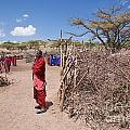 Maasai People And Their Village In Tanzania by Michal Bednarek