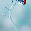 Magic Garden II by Jaroslaw Blaminsky