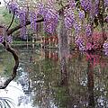 Magnolia Plantation Gardens Series II by Suzanne Gaff