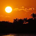 Marco Island Sunset by David Hart