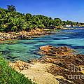 Mediterranean Coast Of French Riviera by Elena Elisseeva