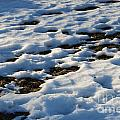 Melting Snow On Lawn by Kerstin Ivarsson