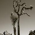 Joshua Tree National Park Landscape No 2 In Sepia by Ben and Raisa Gertsberg