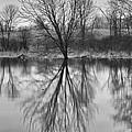 Morning Reflection by Eunice Gibb
