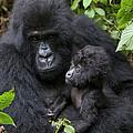Mountain Gorilla And Infant by Suzi Eszterhas