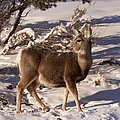 Mule Deer   #6339 by J L Woody Wooden