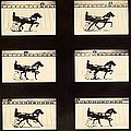 Muybridge Motion Study, 1870s by Science Photo Library