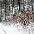 Nature In Winter Under Snow In Denmark by Jean Schweitzer