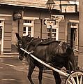 New Orleans - Bourbon Street Horse 3 by Frank Romeo