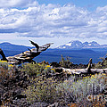 Newberry Lava Beds by Sharon Elliott