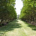 Norfolk Botanical Garden 2 by Jeelan Clark