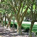 Norfolk Botanical Garden 6 by Jeelan Clark