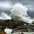 Tidal Leap by Glenda Wright