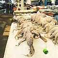 Octopus Sale In Korea Market by Tuimages
