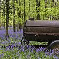 Old Farm Machinery In Vibrant Bluebell  Spring Forest Landscape by Matthew Gibson