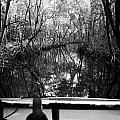 On Board An Airboat Ride Through A Mangrove Jungle In Everglades City Florida Everglades by Joe Fox