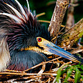 On The Nest by Christopher Holmes