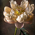 Open Peony by Endre Balogh