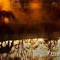 Orange Mist by Joan Davis
