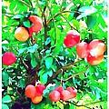 Orange Trees With Fruits On Plantation by Jeelan Clark