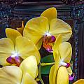 Orchid Flowers Growing Through Old Wooden Picture Frame by Alex Grichenko