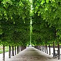 Palais Royal Trees by Brian Jannsen