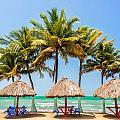 Palm Trees And Sea by Jess Kraft