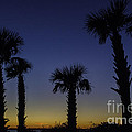 Palmetto Sunset by Dale Powell
