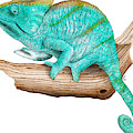 Parsons Chameleon by Roger Hall