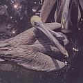 Pelicans by Robert Floyd