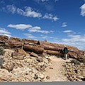 Petrified Forest, Argentina by Science Photo Library