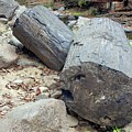 Petrified Tree Trunks by Dr Morley Read/science Photo Library