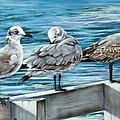 Pier Gulls by Joan Garcia