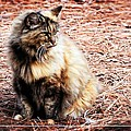 Pine Needle Kitty by Alice Gipson