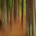 Pine Trees by Heiko Koehrer-Wagner