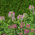 Plants At A Garden, Niagara Parks by Panoramic Images