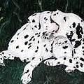 Playful Pups by Jacki McGovern