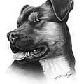 Portrait Of A Dog by Dale Jackson