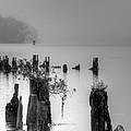 Potomac Fog by JC Findley