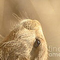 Prairie Dog by Randy J Heath