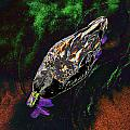 Psychedelic Mallard Duck 1 by Peter Lloyd