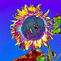 Psychedelic Sunflower by Peter Lloyd