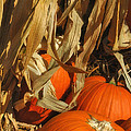 Pumpkin Harvest by Joann Vitali