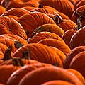 Pumpkin Patch by Brian Stevens